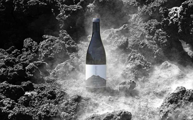 Etichette-vino-Palmento-Costanzo1